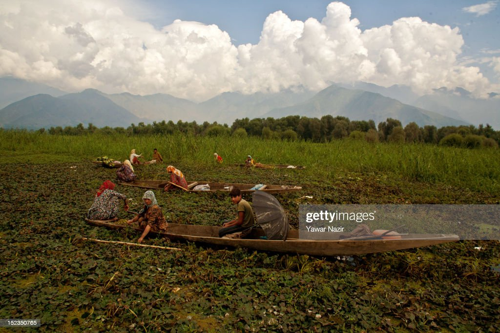Kashmiri women in their boats extract chestnuts from the polluted lake on September 19, 2012 in Wular 75 km (46 miles) north of Srinagar, the summer capital of Indian administered Kashmir, India. Wular Lake, one of the largest freshwater lakes in Asia, is located in the north of Indian administered Kashmir. The Lake, which acts as a natural flood reservoir for the River Jehlum, has shrunk to about a quarter of its original size largely due to siltation from rivers feeding into the lake and human encroachments. Due to human interference, there has been severe depletion of some important endemic and endangered plants. Wular Lake looks more like a flat marshy plain than a large lake now because it is silting up rapidly due to run-off from its denuded catchment.
