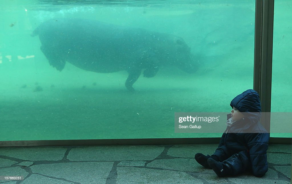Kaspar, 1, sits next to the hippopotamus tank as a grown hippo swims by at Zoo Berlin on December 7, 2012 in Berlin, Germany. The zoo has enjoyed several baby hippo births in recent years, the most recent on November 23.