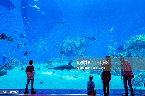 Kastrup, Den Bl? Planet (National Aquarium Denmark), the interior ...