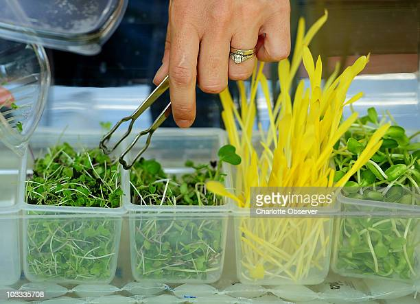 Kate Brun owner of Lucky Leaf Gardens of Harrisburg North Carolina grows microgreens Among the varieties she grows the Deli Mix which consists of...