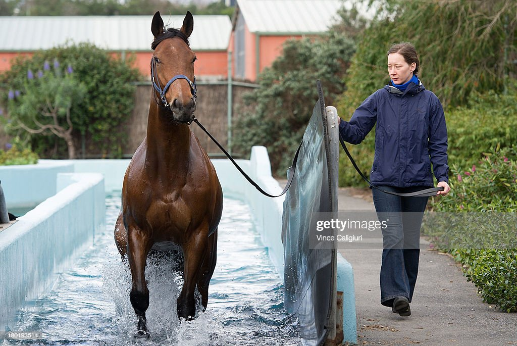 Katharina Niebecker takes Super Cool for swim at Flemington Racecourse on September 10, 2013 in Melbourne, Australia.