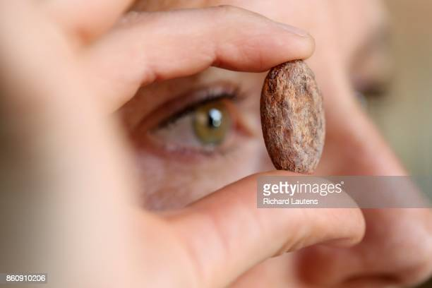 TORONTO ON OCTOBER 5 Katie examines a Dominican cacao bean Soul Chocolate is now open for business on Gerrard Street East at Broadview Owners and...