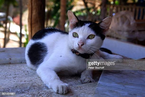 Katze Patong Beach Insel Phuket Thailand SüdOstAsien Tier Reise BB DIG PNr 386/2005