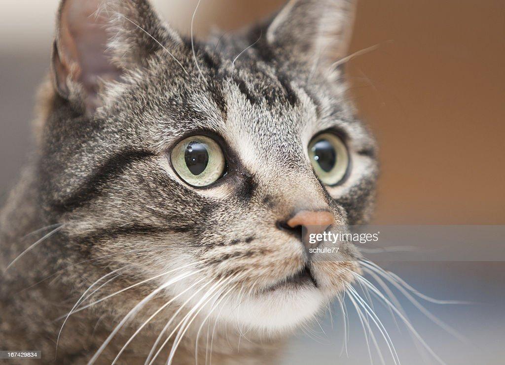 Katzenprotrait : Stock Photo