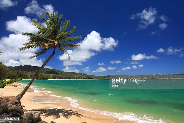 カウアイ島ハワイパシフィックオーシャンパームトリービーチの眺め