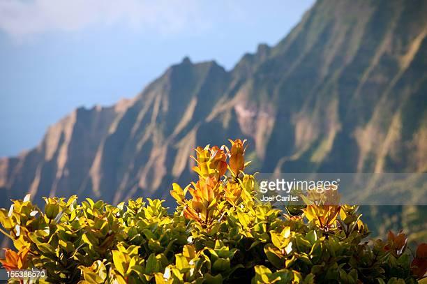 Kauai landscape from Kalalau Lookout