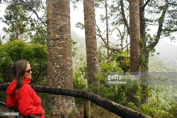 Kauri trees, Waitakere Ranges.