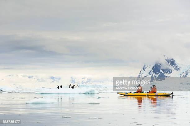 Kayaking near Penguins in Neko harbor