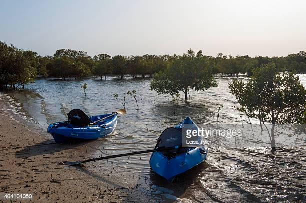 Kayaks in the mangrove forest on Sir Bani Yas