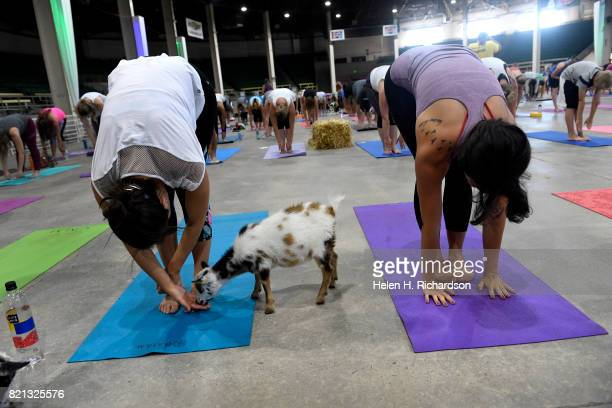 Kayla Anderson left and Devon Cozens right pet a baby goat during goat yoga at the Denver County Fair on July 23 2017 in Denver Colorado 236 yogis...