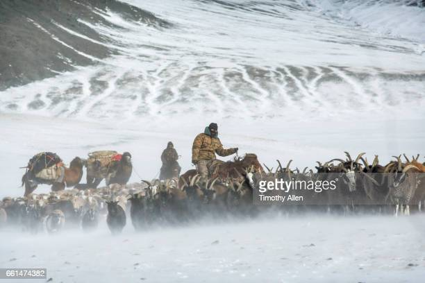 Kazakh Eagle Hunters Nomadic Migration