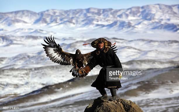 Kazakh golden eagle hunter flies eagle