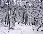 Winter scene in a forest - Kazanka, Russia