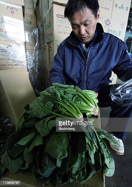 Kazuo Ebihara a staff member of the Japan Agricultural Cooperatives Kashimanada prepares to dispose of spinach in Hokota city Ibaraki prefecture...