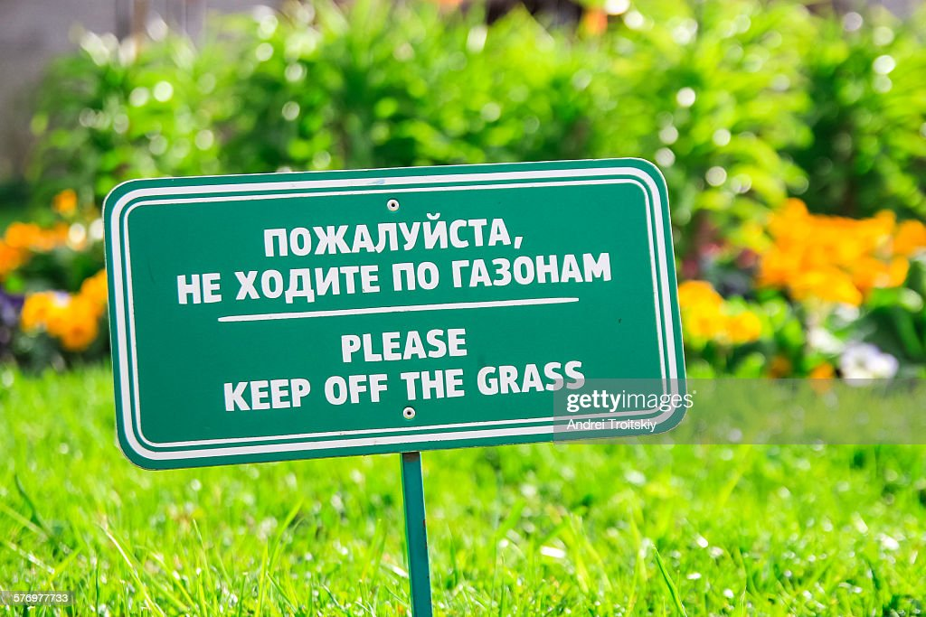 how to keep my lawn green