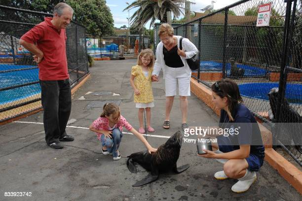 Keeper Catherine Spiller and Pania a New Zealand Fur Seal interact with spectators as Marineland of New Zealand reopens to the public on December 20...