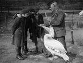A keeper demonstrates how wide the pelican can open its beak to a group of curious schoolboys