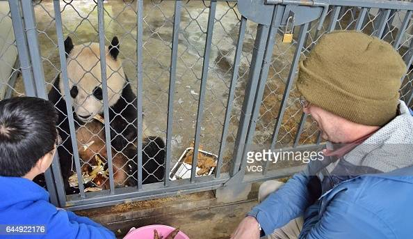 A keeper of Smithsonian's National Zoo and a Chinese keeper feed giant panda Bao Bao at the Dujiangyan base of the China Conservation and Research...