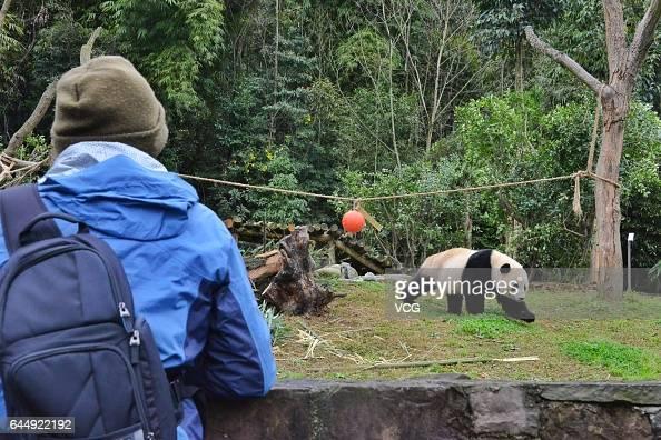 A keeper of Smithsonian's National Zoo looks at giant panda Bao Bao at the Dujiangyan base of the China Conservation and Research Center for Giant...