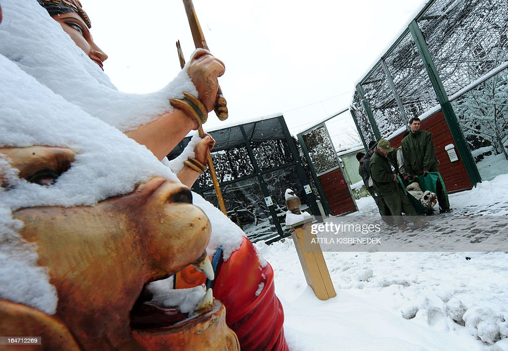 Keepers of the Budapest zoo carry Siberian tiger 'Virgil' past a snow-covered statue on March 27, 2013 at the Budapest Zoo and Botanic Garden as preparations are under way for the transport of three Siberian tigers to their new home, the ZOOM Erlebniswelt in Gelsenkirchen, western Germany. The tigers were born on May 10, 2011 here at the zoo of the Hungarian capital Budapest.