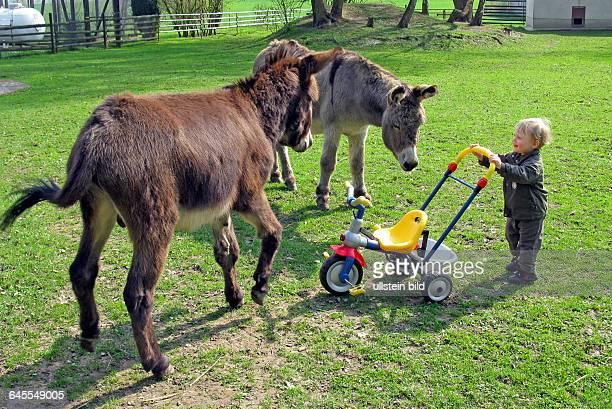Keine Angst vor grossen Eseln hat dieser kleine Junge der sie freudig begruesst