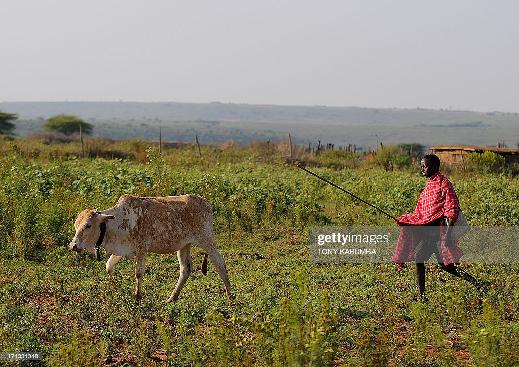 Kelvin Leadismo with his schoolbag hanging on his shoulder tending to his family's cattle near his family's manyatta at Kisima township of Kenya's...