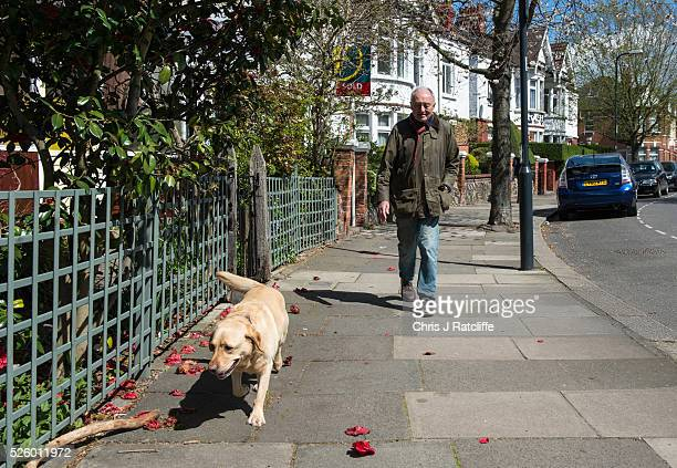 Ken Livingstone walks his dog Coco from his London home on April 22 2016 in London England Former Mayor of London Ken Livingstone has been suspended...