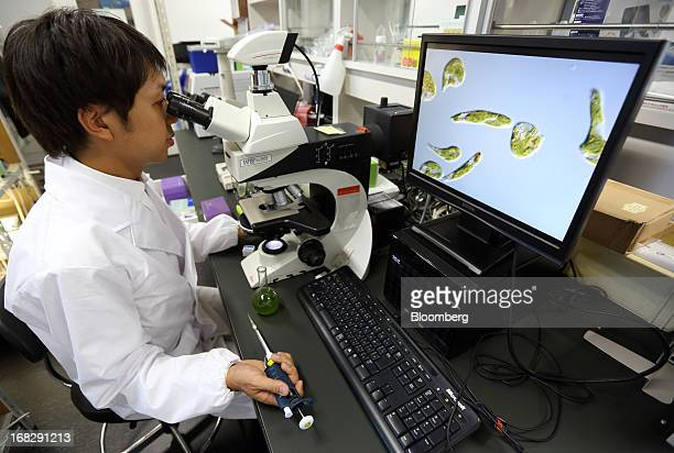 Kengo Suzuki head of Research and Development at Euglena Co looks at Euglena a singlecelled microscopic algae known as Midorimushi in Japanese...