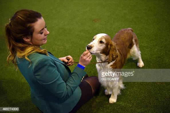 A Kennel Club member shows her Welsh Springer Spaniel dog on the first day of the Crufts dog show at the National Exhibition Centre in Birmingham...