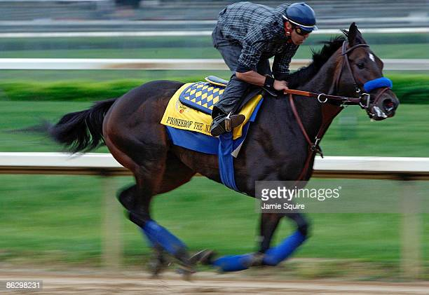 Kentucky Derby competitor Pioneerof the Nile gallops during morning workouts on April 30 2009 at Churchill Downs in Louisville Kentucky