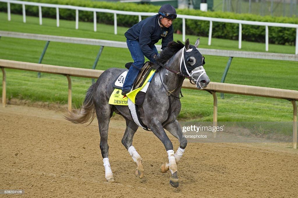 Kentucky Derby contender Destin gallops at Churchill Downs Race Track on May 04, 2016 in Louisville, Kentucky.