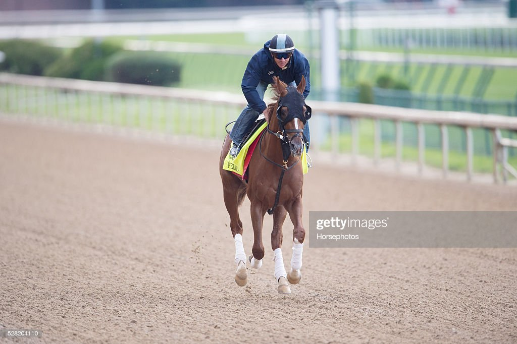 Kentucky Derby contender Fellowship gallops at Churchill Downs Race Track on May 04, 2016 in Louisville, Kentucky.