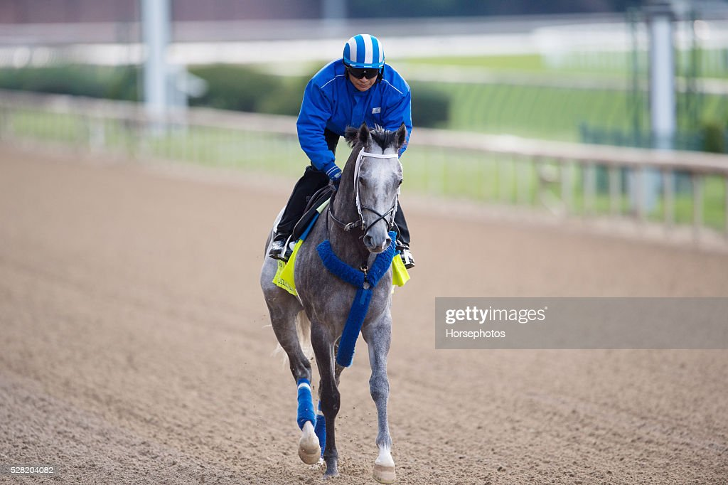 Kentucky Derby contender Mohaymen gallops at Churchill Downs Race Track on May 04, 2016 in Louisville, Kentucky.