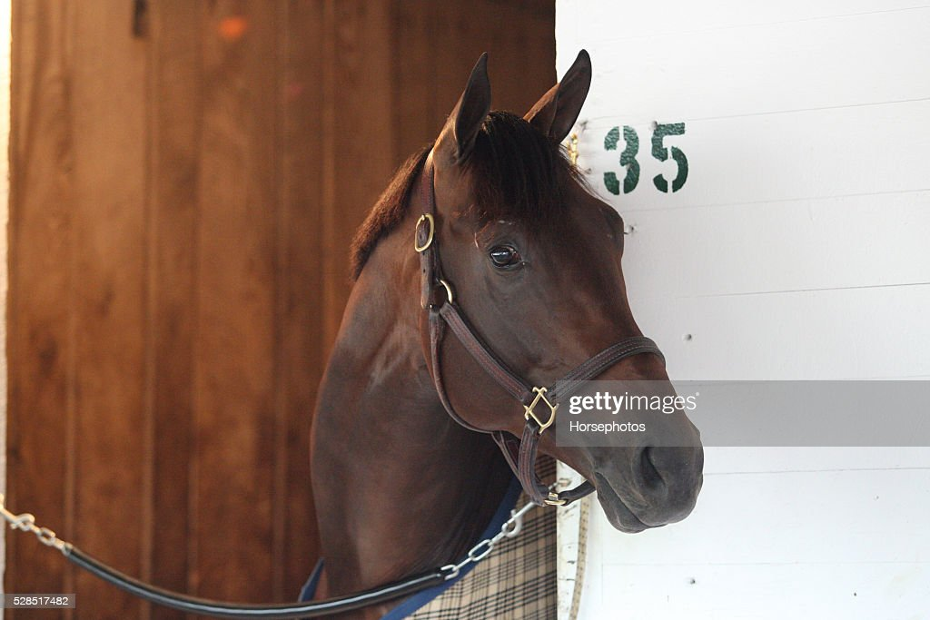 Kentucky Derby contender Outwork in portrait at Churchill Downs Race Track on May 5, 2016 at Churchill Downs, Louisville