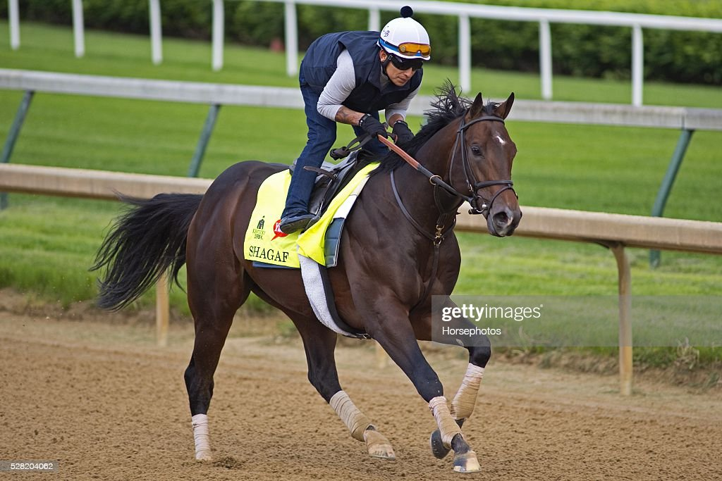 Kentucky Derby contender Shagaf gallops at Churchill Downs Race Track on May 04, 2016 in Louisville, Kentucky.