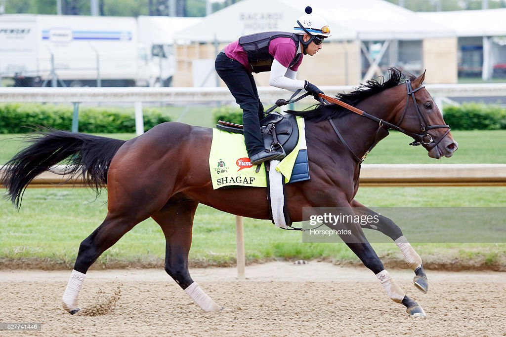 Kentucky Derby favorite Shagaf gallops during workouts at Churchill Downs Race Track on May 2, 2016 at Churchill Downs in Louisville, Kentucky.