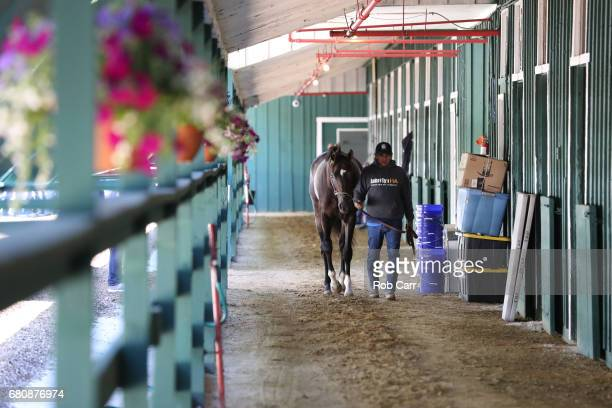 Kentucky Derby winner Always Dreaming walks in the barn after arriving at Pimlico Race Course for the upcoming Preakness Stakes on May 9 2017 in...