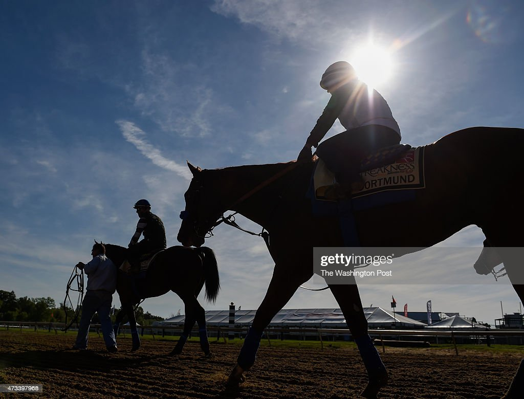 Kentucky Derby winner American Pharoah and Preakness horse Dortmund leave the track after their workout at Pimlico in preparation for this weekend's...