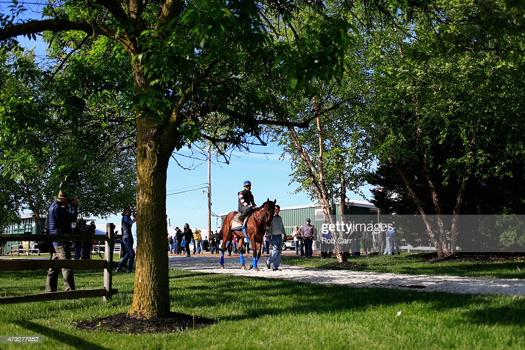 Kentucky Derby winner American Pharoah walks to the track for training for the 140th Preakness Stakes at Pimlico Race Course on May 14 2015 in...