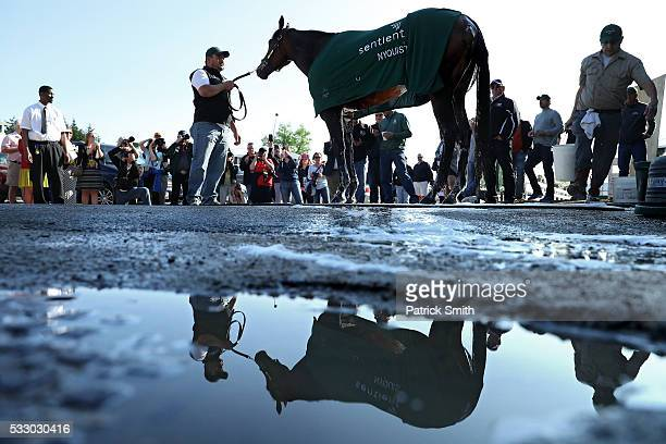 Kentucky Derby winner Nyquist is bathed after a training session for the 141st running of the Preakness Stakes at Pimlico Race Course on on May 20...
