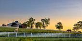 Kentucky farm at sunrise