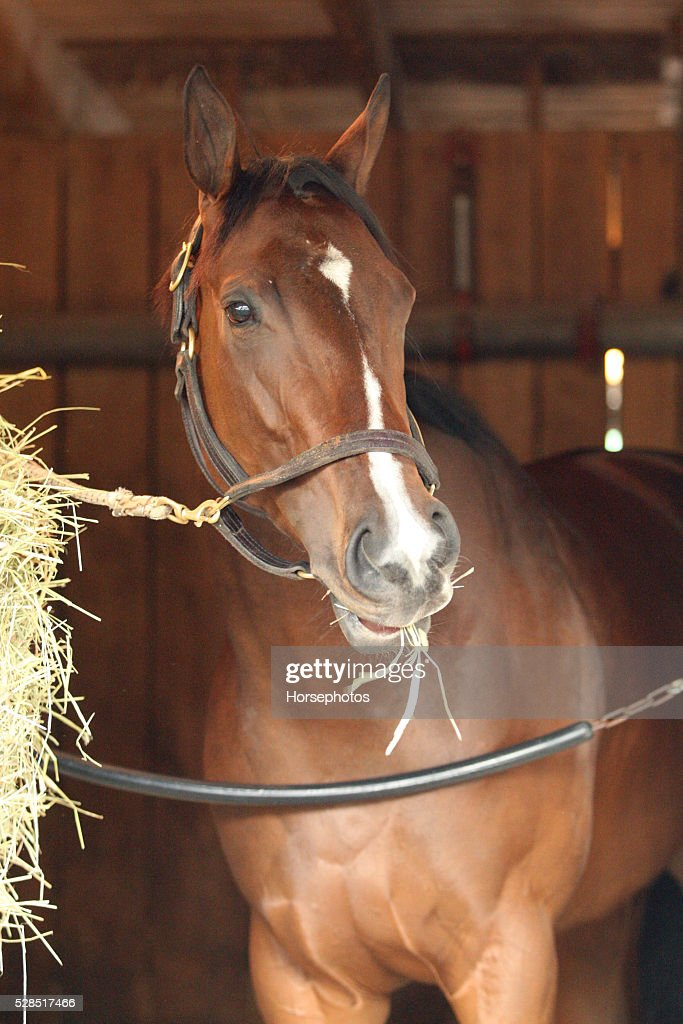 Kentucky Oaks contender Go Maggie Go in portrait at Churchill Downs Race Track on May 5, 2016 at Churchill Downs, Louisville