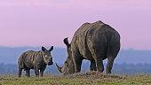 Wildlife pictures from Samburu National Reserve and Nairobi National Park in Kenya