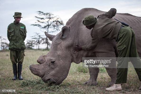 CONSERVANCY Kenya Caretakers Mohammed Doyo and Zachary Mutai spend time with Sudan Sudan the last male northern white rhino left on the planet lives...