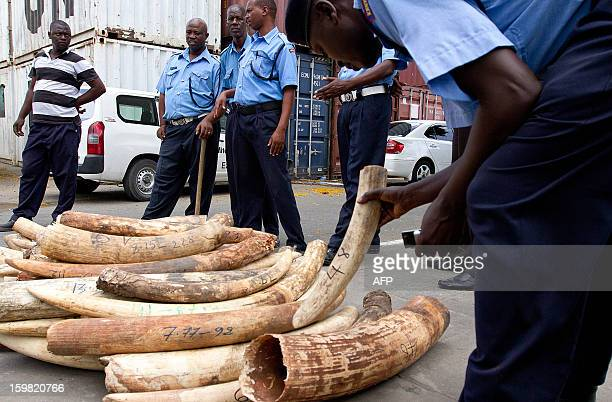 Kenya Ports Authority employees weigh ivory tusks on January 21 2013 at the port of Mombasa after their seizure by officials on January 15 Kenya...
