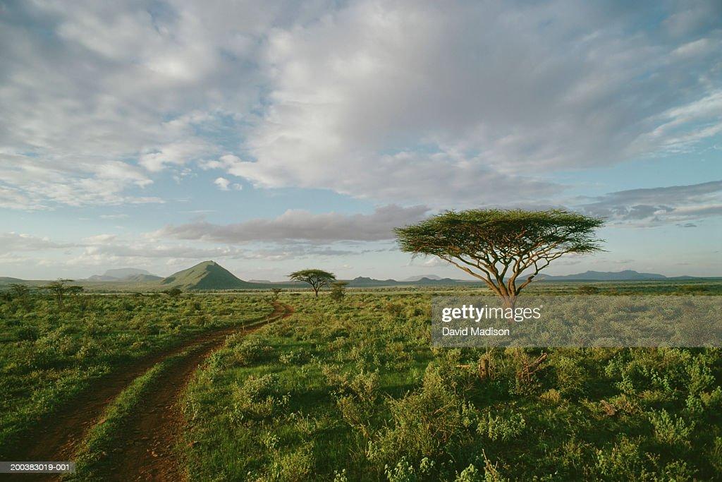Kenya, Samburu National Park, dirt road and acacia trees : Stock Photo