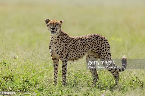 Kenya wild life