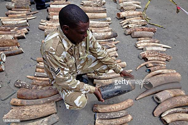 A Kenya Wildlife Service Ranger inspects a confiscated ivory consignment at the Mombasa Port on October 8 2013 The Kenya Ports Authority intercepted...