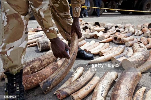A Kenya Wildlife Service Ranger numbers a confiscated ivory consignment at the Mombasa Port on October 8 2013 The Kenya Ports Authority intercepted a...