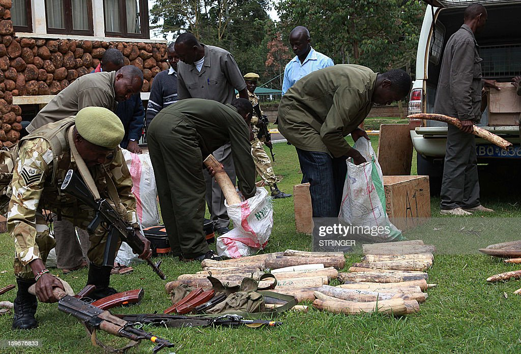Kenya Wildlife Service (KWS) warders stand in front of tusks recovered from poachers on January 16, 2013 at their headquarters in Nairobi.With increases in price and demand of ivory in South-East Asian countries, poaching activities have increased with KWS reporting the highest ever recorded loss in a single year of 384 elephants.AFP PHOTO/STRINGER